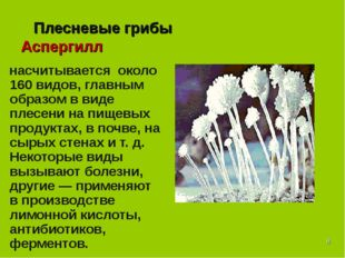 * Плесневые грибы Аспергилл насчитывается около 160 видов, главным образом в