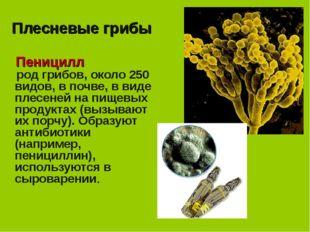 Плесневые грибы Пеницилл род грибов, около 250 видов, в почве, в виде плесене