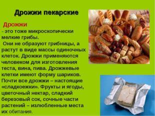 Дрожжи пекарские Дрожжи – это тоже микроскопически мелкие грибы. Они не образ