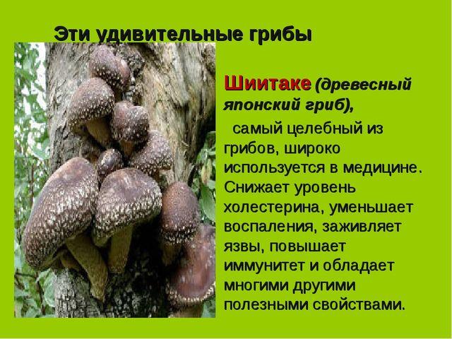Эти удивительные грибы Шиитаке (древесный японский гриб),  самый целебный из...