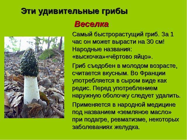 Эти удивительные грибы Веселка Самый быстрорастущий гриб. За 1 час он может в...