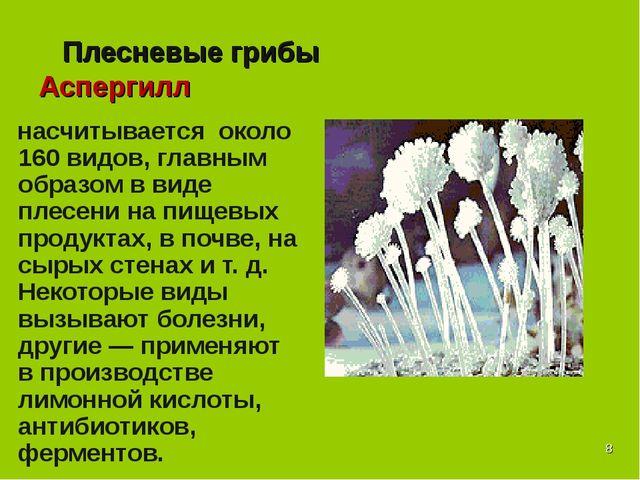 * Плесневые грибы Аспергилл насчитывается около 160 видов, главным образом в...