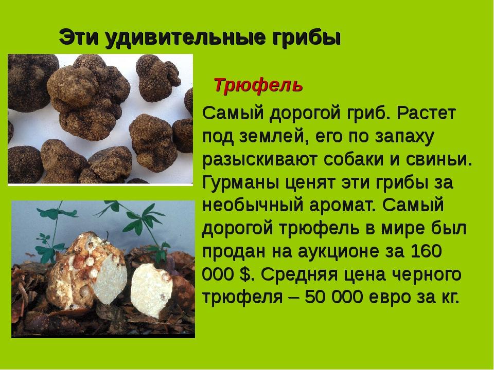 Эти удивительные грибы Трюфель Самый дорогой гриб. Растет под землей, его по...