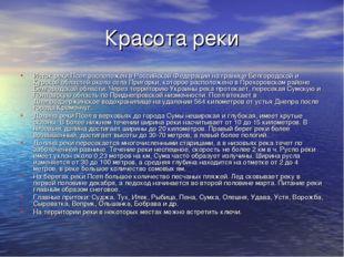 Красота реки Исток реки Псел расположен в Российской Федерации на границе Бел