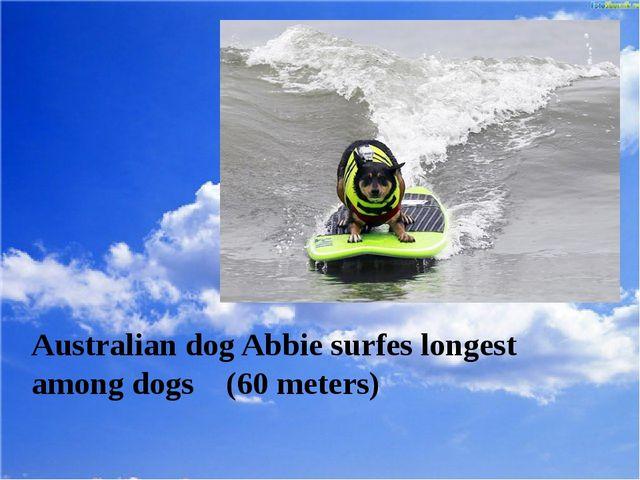 Australian dog Abbie surfes longest among dogs (60 meters)