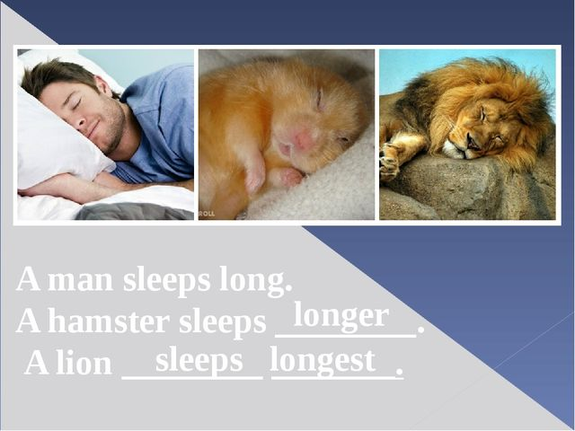 A man sleeps long. A hamster sleeps ________. A lion ________ _______. longer...