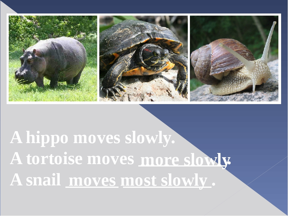 A hippo moves slowly. A tortoise moves __________. A snail ______ __________....