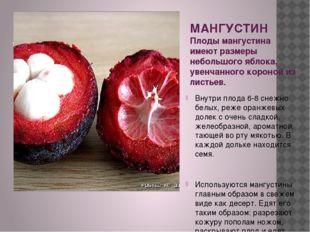 МАНГУСТИН Плоды мангустина имеют размеры небольшого яблока, увенчанного коро
