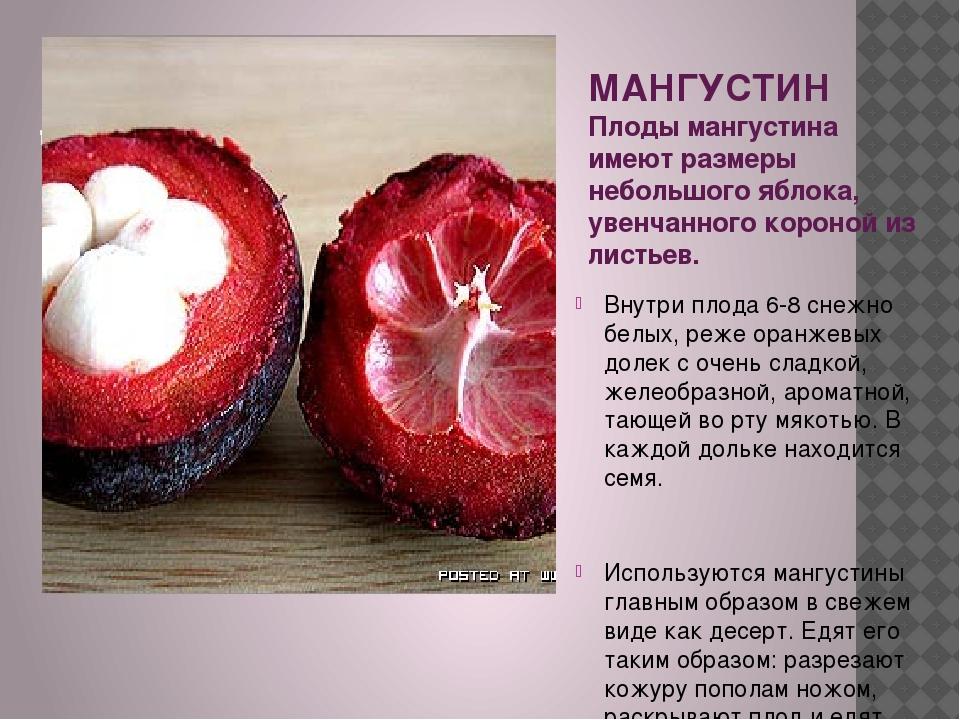 МАНГУСТИН Плоды мангустина имеют размеры небольшого яблока, увенчанного коро...