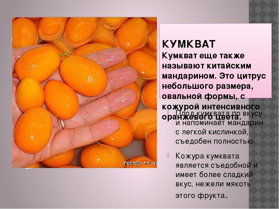 КУМКВАТ Кумкват еще также называют китайским мандарином. Это цитрус небольшо...