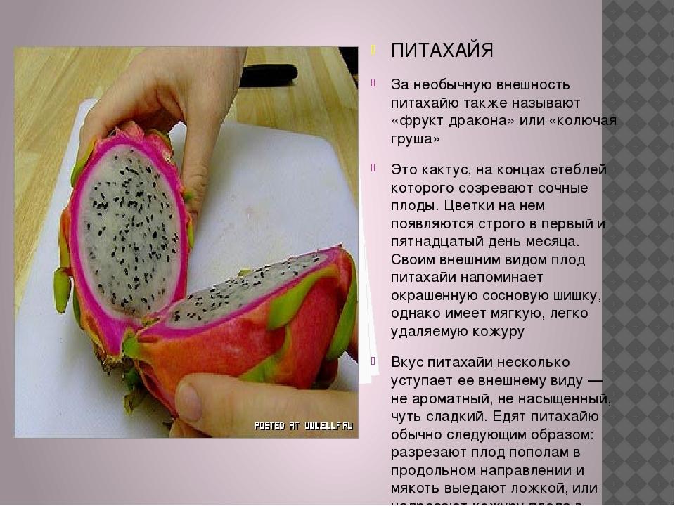 ПИТАХАЙЯ За необычную внешность питахайю также называют «фрукт дракона» или...