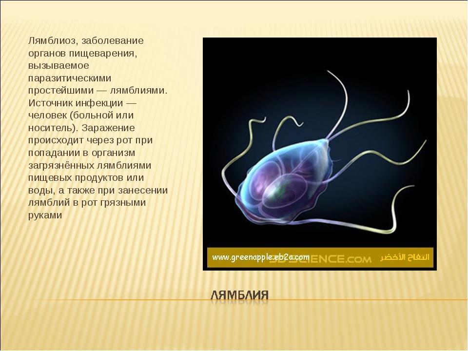 Лямблиоз, заболевание органов пищеварения, вызываемое паразитическими простей...