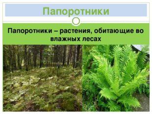 Папоротники Папоротники – растения, обитающие во влажных лесах