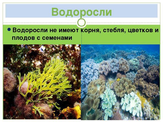Водоросли Водоросли не имеют корня, стебля, цветков и плодов с семенами