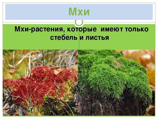 Мхи Мхи-растения, которые имеют только стебель и листья