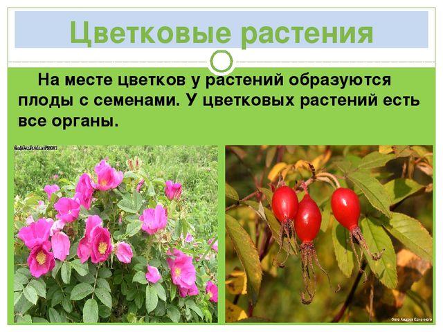 Цветковые растения На месте цветков у растений образуются плоды с семенами. У...