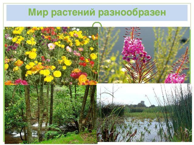 Мир растений разнообразен