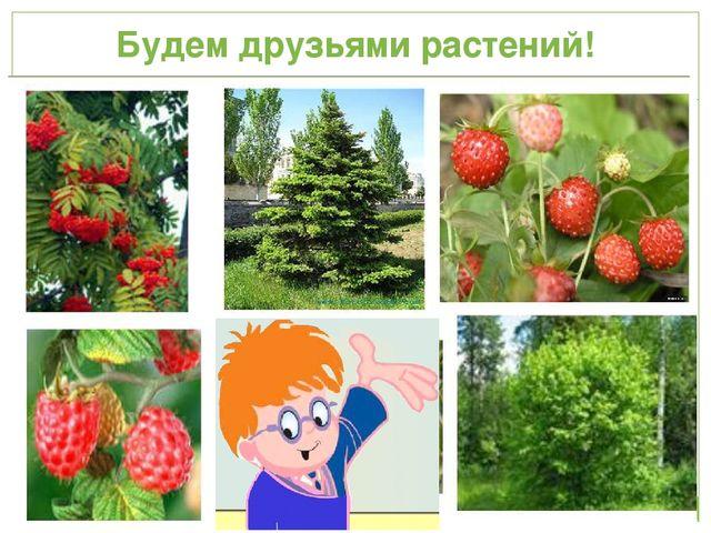 Будем друзьями растений!
