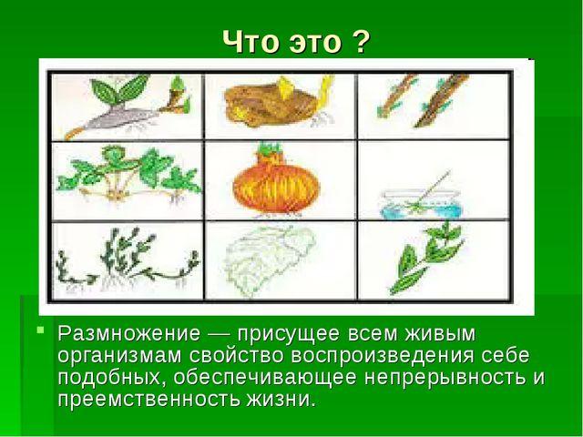 Что это ? Размножение — присущее всем живым организмам свойство воспроизведен...