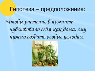Гипотеза – предположение: Чтобы растение в комнате чувствовало себя как дома,