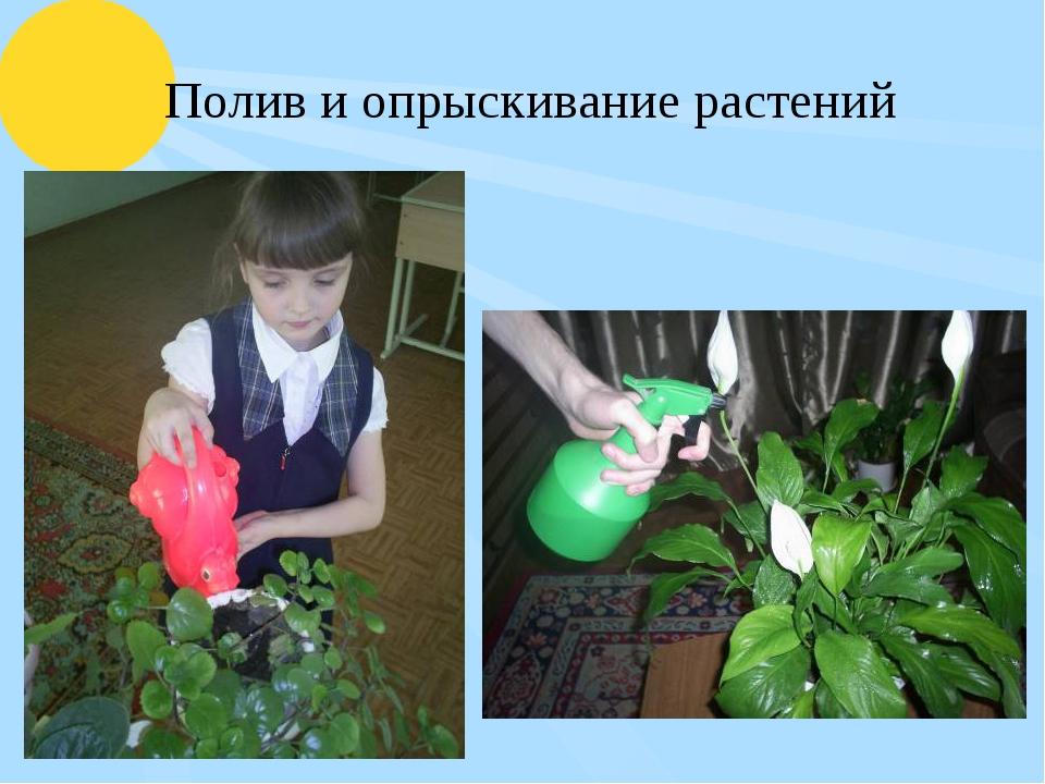 Полив и опрыскивание растений