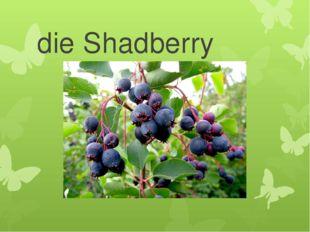 die Shadberry