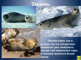 Для охраны редких животных, человек ограничил рыбную ловлю, создал заповедни