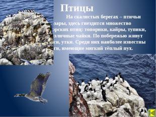 Выберите животных, которые обитают в Арктике. Закрепление Лось Бурый медведь