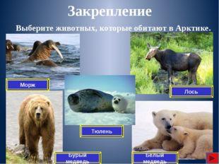 Какой арктический заповедник создан для охраны животного мира в России? Закр