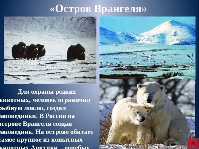 Сутками бродит великан Арктики по снежной пустыни в поисках добычи. Он часам...