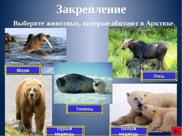 Какой арктический заповедник создан для охраны животного мира в России? Закр...