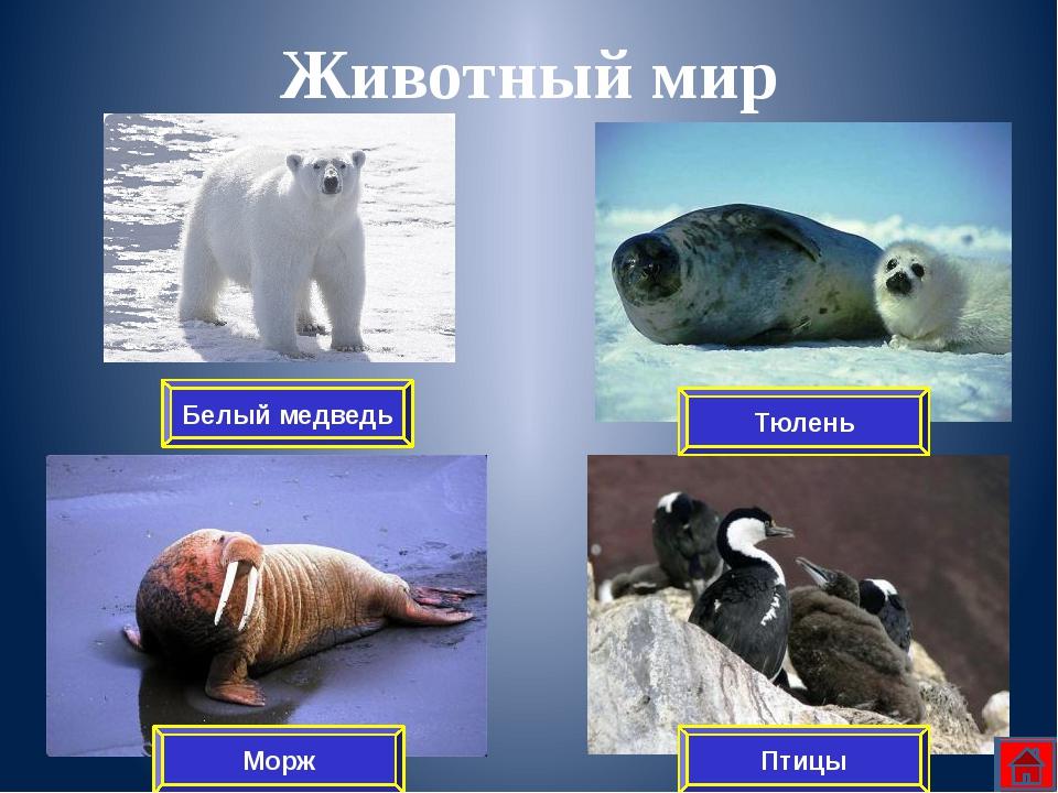 Географическое положение Растительный мир Животный мир Закрепление Деятельнос...