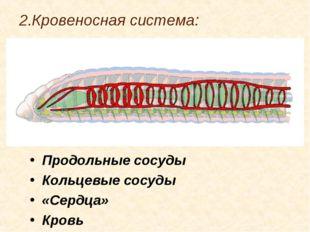 2.Кровеносная система: Продольные сосуды Кольцевые сосуды «Сердца» Кровь