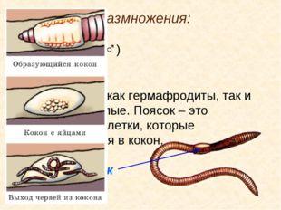 5. Система размножения: Семенники (♂) Яичники (♀) Встречаются как гермафродит