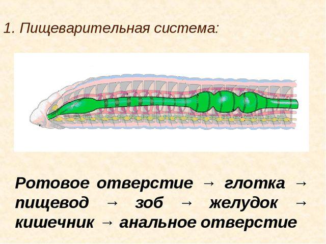 1. Пищеварительная система: Ротовое отверстие → глотка → пищевод → зоб → желу...