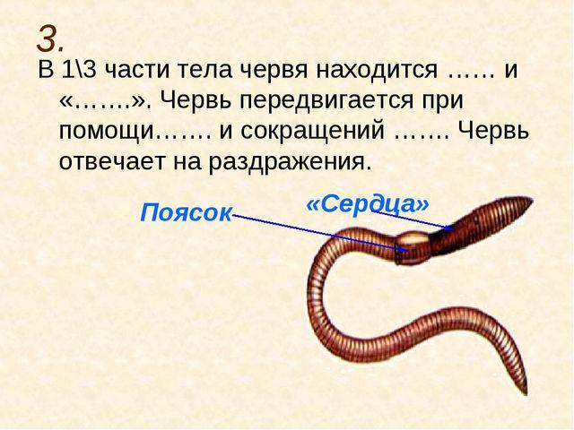 3. В 1\3 части тела червя находится …… и «…….». Червь передвигается при помощ...