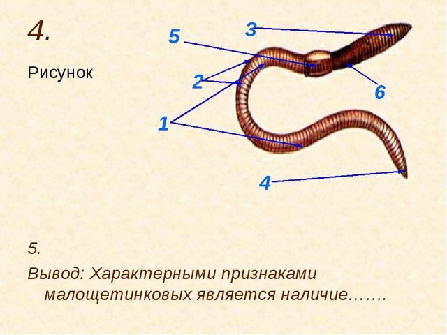 4. Рисунок 5. Вывод: Характерными признаками малощетинковых является наличие…...