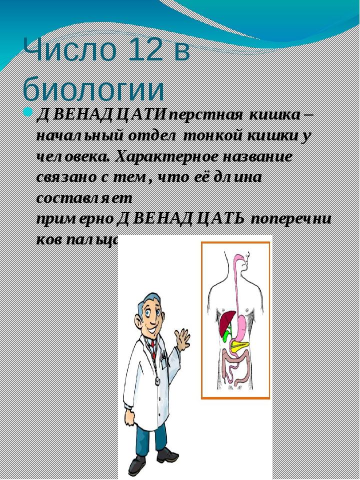 ДВЕНАДЦАТИперстная кишка – начальный отдел тонкой кишки у человека. Характерн...