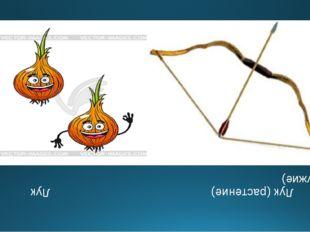 Лук (растение) Лук (оружие)