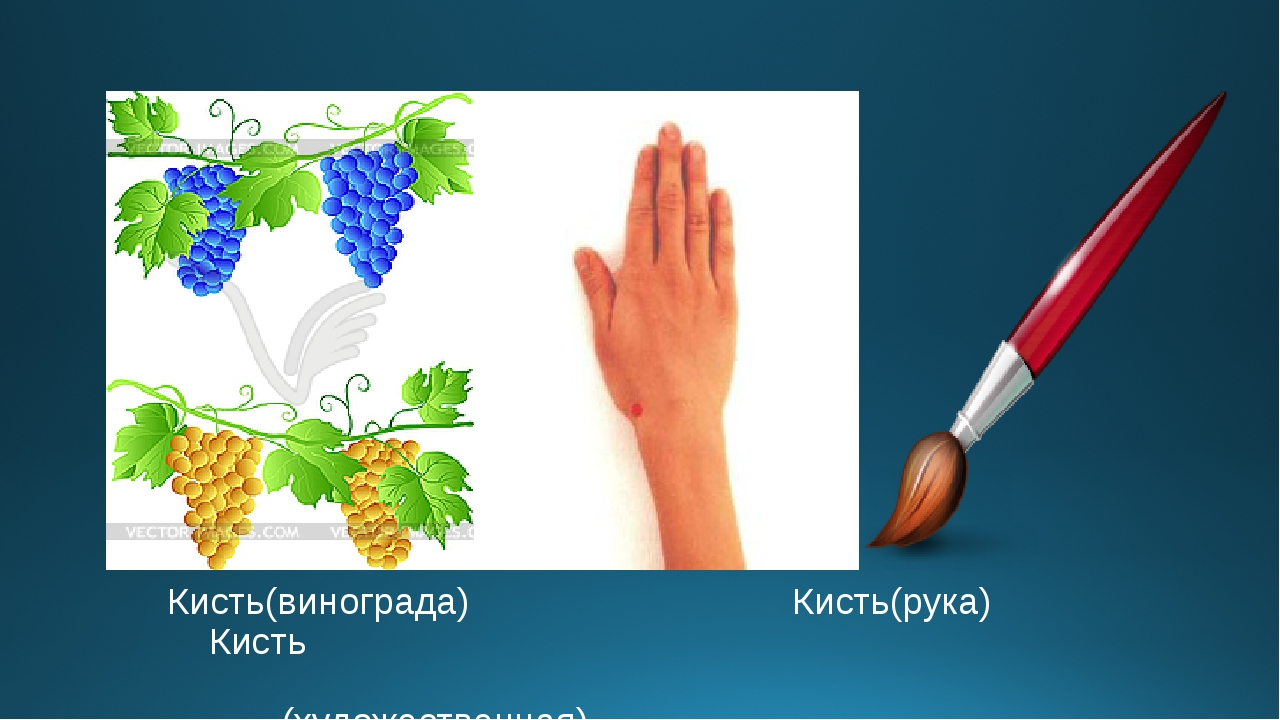 Кисть(винограда) Кисть(рука) Кисть (художественная)