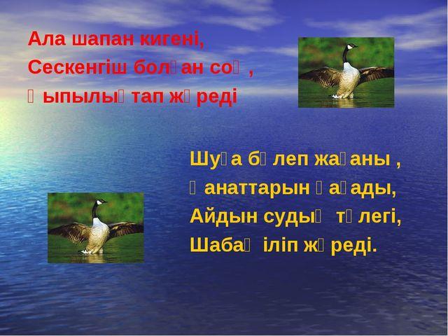 Ала шапан кигені, Сескенгіш болған соң, Қыпылықтап жүреді Шуға бөлеп жағаны ,...