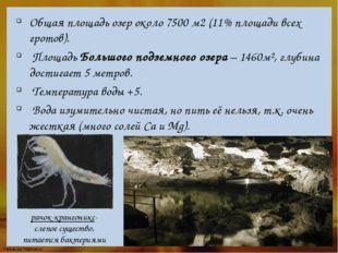 Общая площадь озер около 7500 м2 (11% площади всех гротов). Площадь Большого