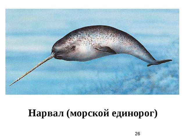 Нарвал (морской единорог)