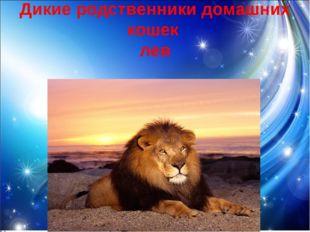 Дикие родственники домашних кошек лев