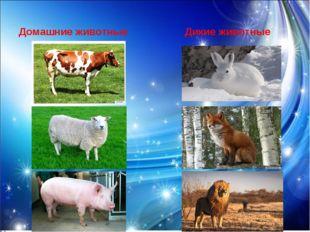 Домашние животные Дикие животные