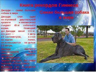 Книга рекордов Гиннеса Самая большая собака в мире Джордж— самая большая соб