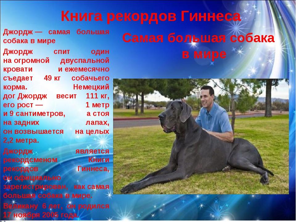 Книга рекордов Гиннеса Самая большая собака в мире Джордж— самая большая соб...