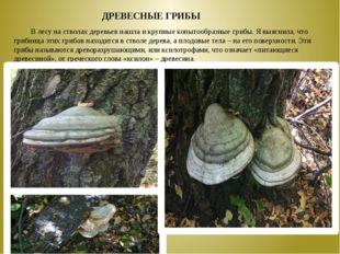 В лесу на стволах деревьев нашла и крупные копытообразные грибы. Я выяснила,