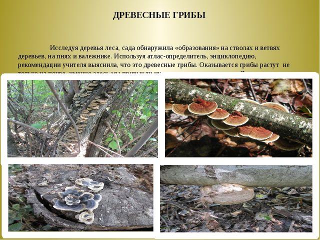 Исследуя деревья леса, сада обнаружила «образования» на стволах и ветв...