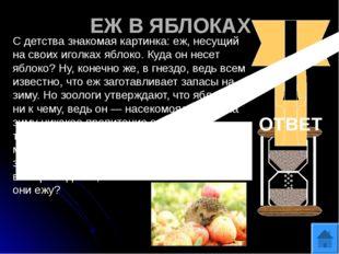 ДЕТЕКТИВ «ТРИ ПОРОСЕНКА» На ферме у одной из свиноматок украли трех маленьких